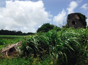 Old mill and cane field in Mount Brevitor. If you look closely, you can see women laboring the fields.
